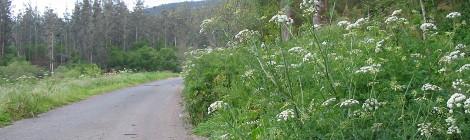 Un exemplo da vexetación que invade as cunetas das estradas do noso concello